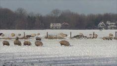 Rondje Koggenland (in de sneeuw)